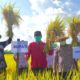 Bupati Mojokerto Panen Raya di Kutorejo, Dibeli Pemkab, Disalurkan ke Masyarakat Terdampak Covid-19